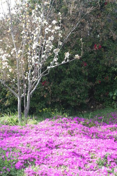 Eastergarden